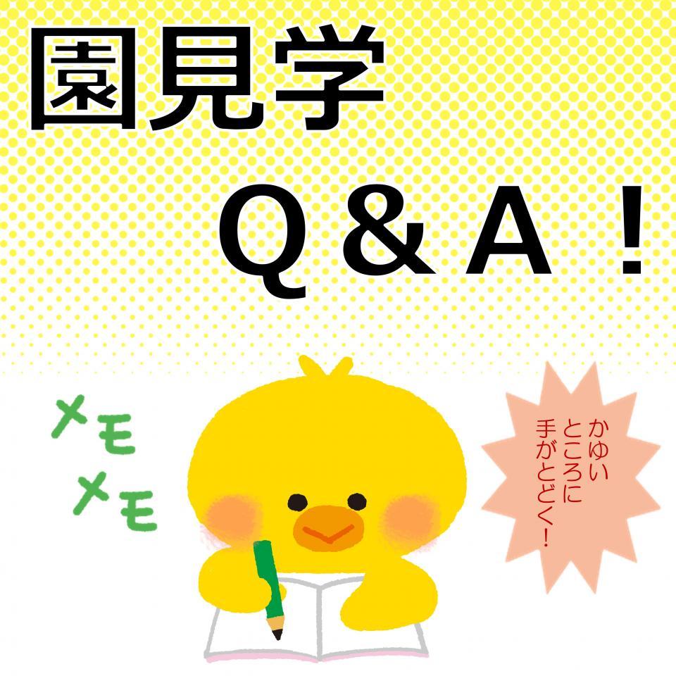 園見学のQ&A!よくあるシチュエーションにお答え!