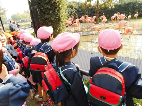 学校法人なごみ学園 いわさき幼稚園/いわさき第二幼稚園
